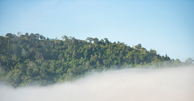 Paysage brumeux montagnes forêt brumeuse avec arbre dans la nature d'hiver moring - vue de brumeux