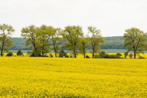 Paysage de campagne agricole