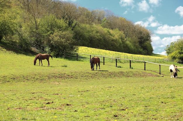 Paysage de campagne ensoleillée avec des chevaux au printemps