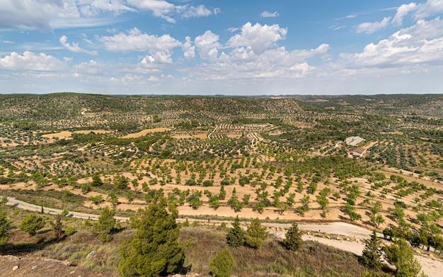 Paysage de campagne avec des oliviers jusqu'à l'horizon