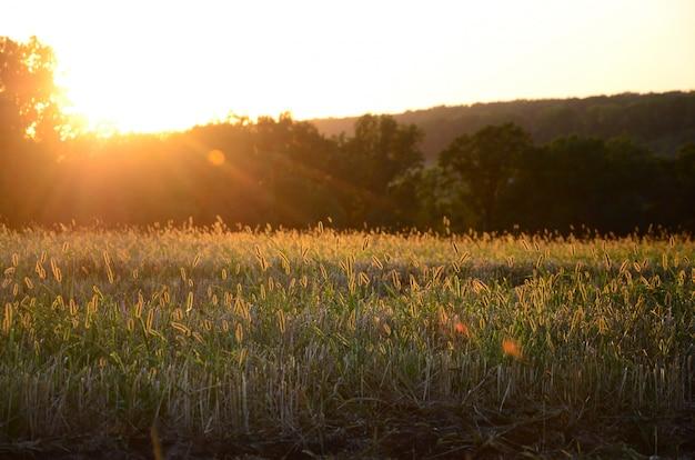 Paysage de champ au coucher du soleil après avoir brûlé l'herbe de l'année dernière