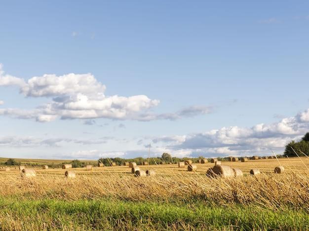 Paysage de champ de blé