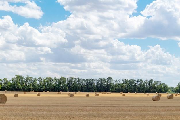 Paysage de champ de céréales de blé récolté