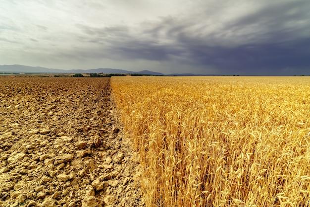 Paysage de champ de céréales et de terres non ensemencées avec ciel orageux dramatique.