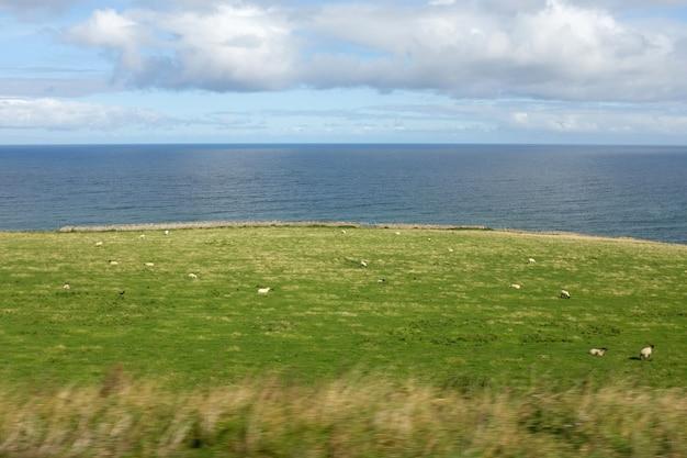 Un paysage d'un champ à côté de la mer avec un troupeau de moutons