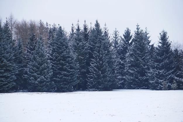 Paysage d'un champ entouré de conifères couverts de neige pendant la journée en hiver