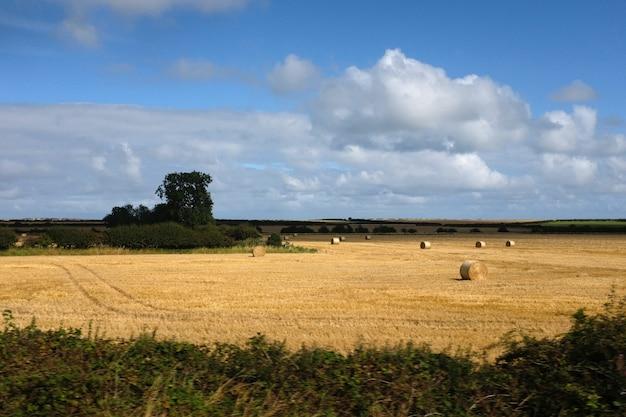 Le paysage d'un champ de foin en ecosse
