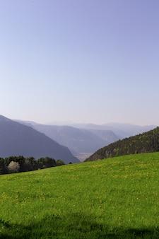 Paysage de champ d'herbe verte