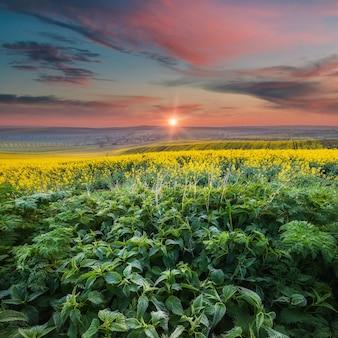 Paysage avec champs et ciel; champ vert avec de jeunes herbes brillantes