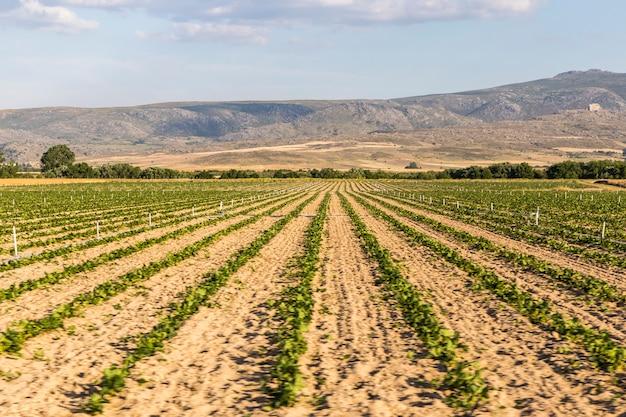 Paysage de champs cultivés