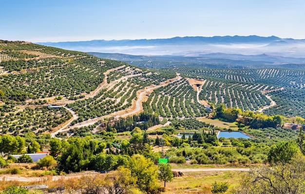Paysage avec champs d'oliviers près d'ubeda - espagne, andalousie