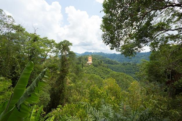 Paysage de colline de forêt tropicale humide
