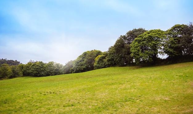 Paysage de colline avec herbe verte, rangée d'arbres en arrière-plan et ciel bleu