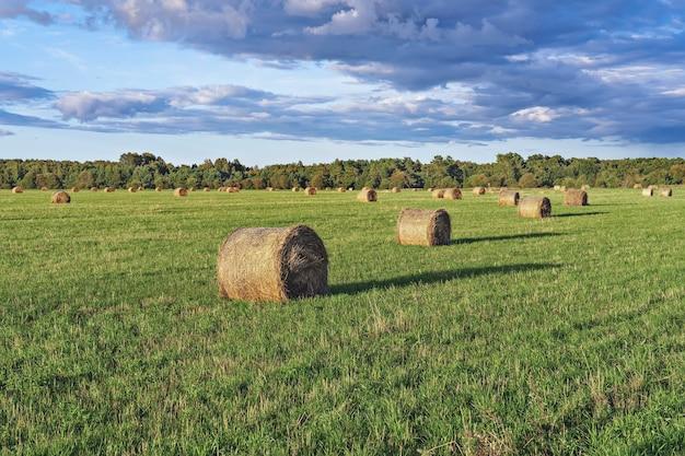 Paysage de collines vertes et de champs agricoles et de bottes de paille au coucher du soleil