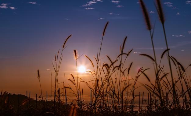 Paysage coloré au moment du matin sur la silhouette d'herbe de fond et de premier plan de lever et brouillard