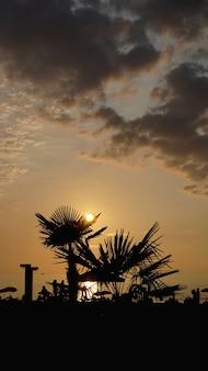 Paysage de coucher de soleil. coucher de soleil sur la plage. palmiers, silhouette, sur, coucher soleil, plage tropicale, été