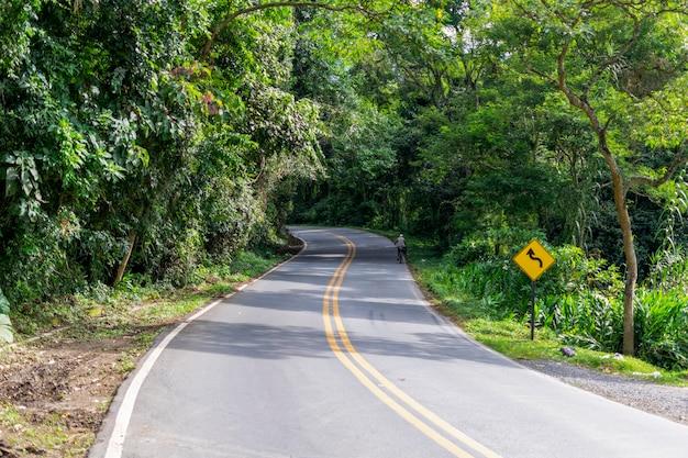 Paysage avec des courbes sur la route couverte d'arbres