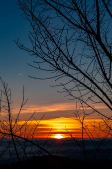 Paysage crépusculaire sur le fond du coucher du soleil et sujet de premier plan de branche d'arbre silhouette