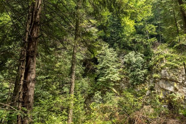 Paysage dans la vallée de la vaser, bucovine, train à vapeur de mocanita, roumanie