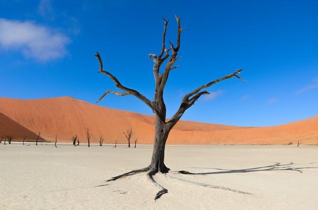 Paysage de dead vlei, sossusvlei, désert du namib, namibie, afrique du sud