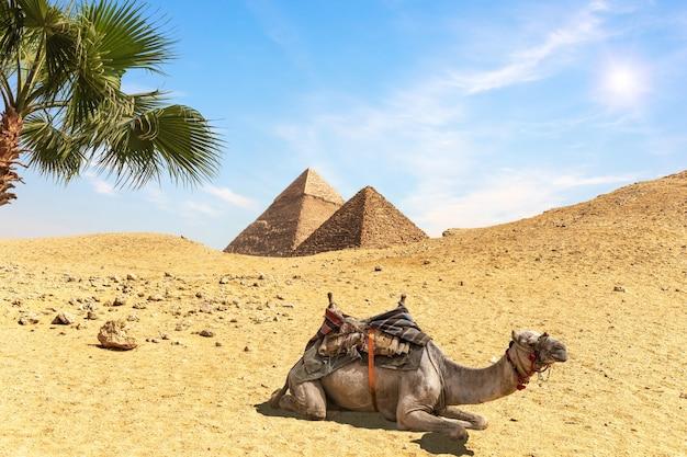 Paysage désertique avec les pyramides, un chameau et des palmiers, egypte.
