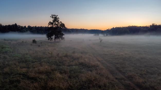 Paysage du champ dans la brume matinale juste avant le lever du soleil