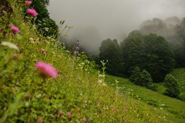 Paysage du champ vert dans la forêt à feuilles persistantes avec du brouillard