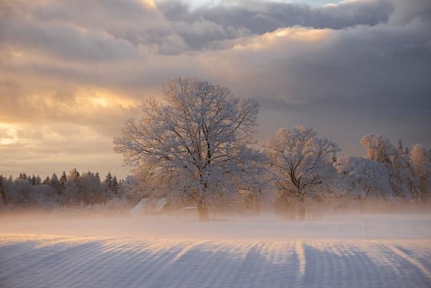 Paysage du matin d'hiver à krimulda, lettonie