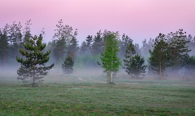 Paysage du matin avec des pins et du brouillard sur un pré