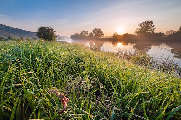 Paysage du matin avec rivière et web dans l'herbe, fraîcheur printanière au lever du soleil