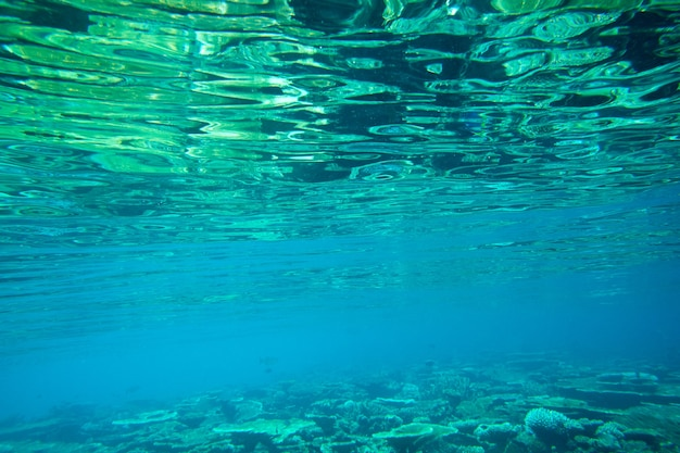 Paysage du monde sous-marin