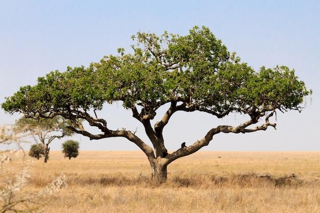 Paysage du parc national du serengeti, tanzanie