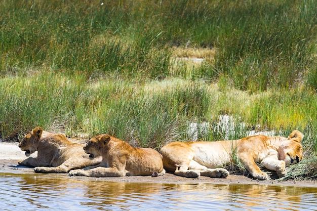 Paysage du serengeti, tanzanie
