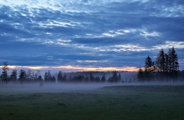 Paysage du soir avec pins et brouillard sur un pré