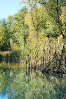 Paysage d'eau du lac de la forêt d'été