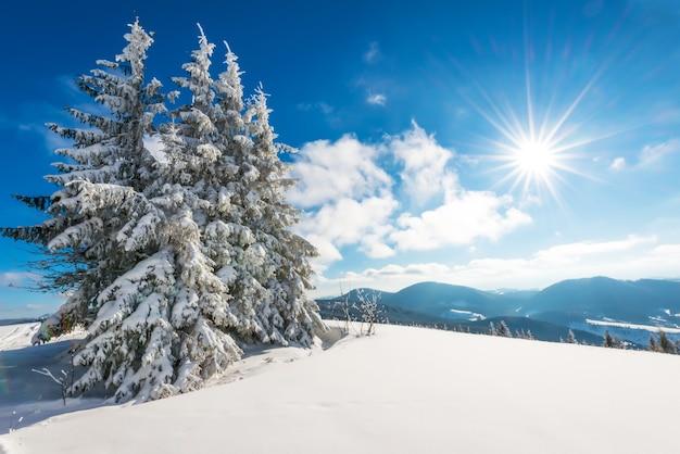 Paysage ensoleillé fascinant d'une forêt d'hiver située sur une pente enneigée par une journée d'hiver glaciale ensoleillée