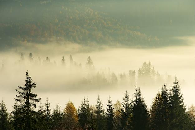 Paysage ensoleillé de montagne des carpates