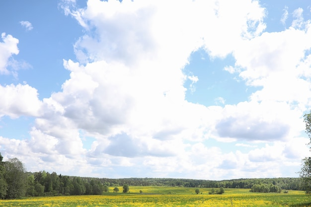 Le paysage, c'est l'été. arbres verts et herbe dans un paysage de campagne. journée d'été nature. feuilles sur les buissons.
