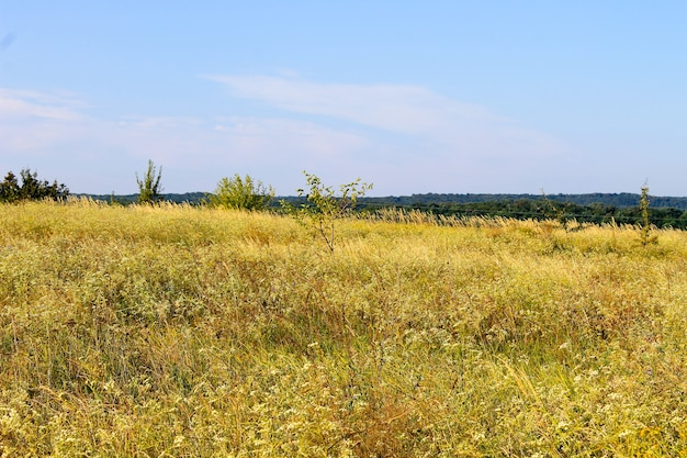 Paysage d'été avec des arbres de prairie et des collines
