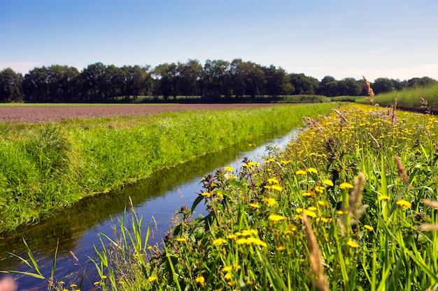 Paysage d'été aux pays-bas avec pré vert et ruisseau calme