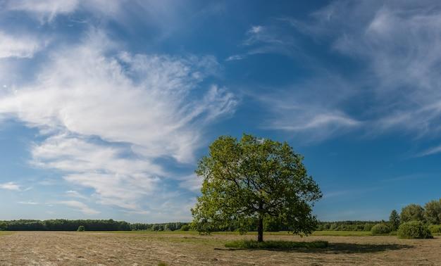 Paysage d'été avec chêne solitaire sur prairie tondue, ciel bleu et nuages, journée ensoleillée