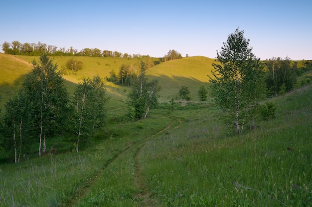 Paysage d'été avec collines verdoyantes et forêt de bouleaux