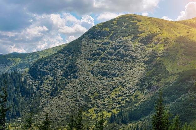 Paysage d'été dans les montagnes des carpates.