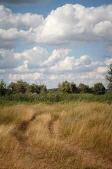 Paysage d'été avec une prairie herbeuse et une route allant dans la forêt sur un ciel bleu avec des cumulus
