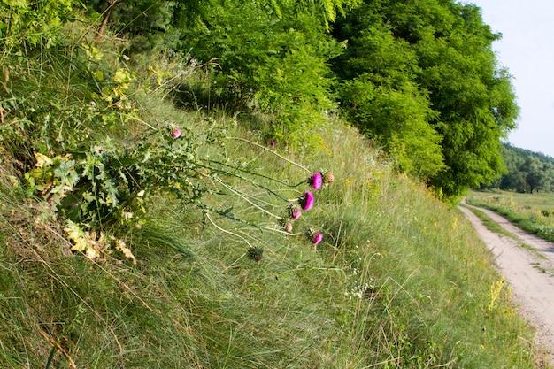 Paysage d'été avec une prairie herbeuse et une route allant dans la forêt