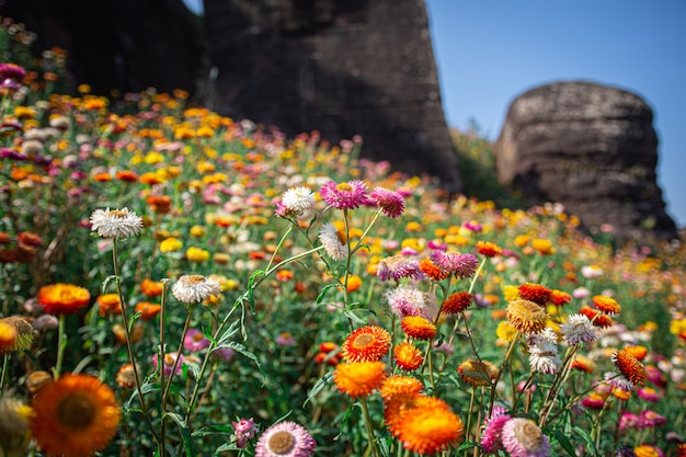 Paysage de fleurs colorées