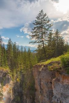 Paysage forestier du canada avec un arbre en alberta, canada