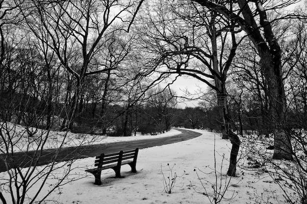 Paysage forestier avec de la neige parmi les arbres et des branches sans feuilles