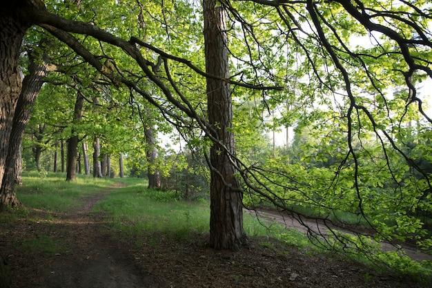 Paysage forestier parmi les chênes
