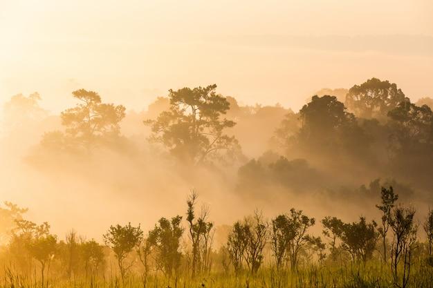 Paysage forestier de pin